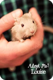 Gerbil for adoption in West Des Moines, Iowa - Louise