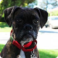 Adopt A Pet :: Bonnie - Alameda, CA