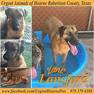 Border Collie/German Shepherd Dog Mix Dog for adoption in Hearne, Texas - Lansford aka Lani