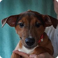 Adopt A Pet :: Dillion - Oviedo, FL