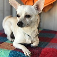 Adopt A Pet :: HYATT - Elk Grove, CA