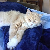 Adopt A Pet :: Dolly - San Carlos, CA