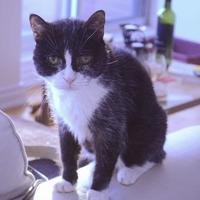 Adopt A Pet :: Maggie Mae - Toronto, ON