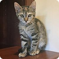 Adopt A Pet :: Moxie - Prescott, AZ