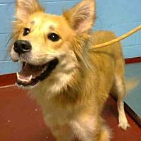 Adopt A Pet :: HAZEL - Atlanta, GA