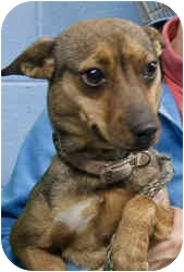 Terrier (Unknown Type, Small) Mix Dog for adoption in Clarkesville, Georgia - Lucy