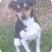 Adopt A Pet :: Jack: courtesy post - Medora, IN