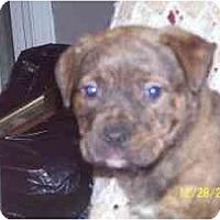 Adopt A Pet :: Tucker - Roseville, MI