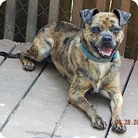Adopt A Pet :: Coop(21 lb) Unique & Great Pet! - SUSSEX, NJ
