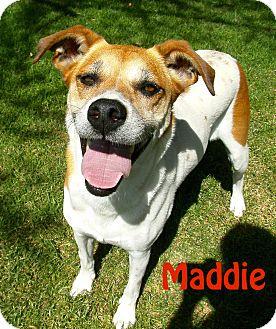 Terrier (Unknown Type, Medium)/Greyhound Mix Dog for adoption in El Cajon, California - Maddie