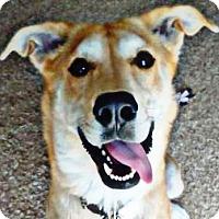 Adopt A Pet :: Claire - Mt. Clemens, MI