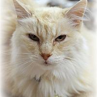 Adopt A Pet :: Ginger - Atascadero, CA
