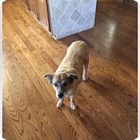 Adopt A Pet :: Ginger - Newport, KY