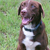 Adopt A Pet :: Frodo - Clearwater, FL