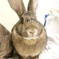 Adopt A Pet :: Mia - Montreal, QC