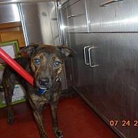 Adopt A Pet :: Precious Mooney - Douglasville, GA