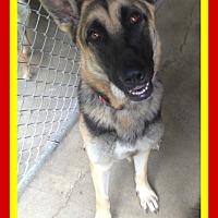 Adopt A Pet :: BOOMER - Halifax, NS
