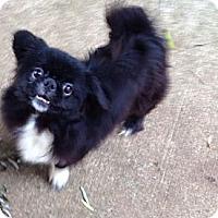 Adopt A Pet :: Sammy (in Maine) - Vansant, VA