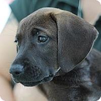 Adopt A Pet :: Scottie - South Jersey, NJ