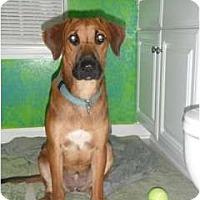 Adopt A Pet :: Keris - Seneca, SC