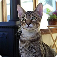 Adopt A Pet :: Rex - Grand Rapids, MI