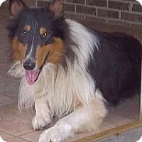 Adopt A Pet :: Axel - Minneapolis, MN