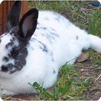 Adopt A Pet :: Bailey - Santee, CA