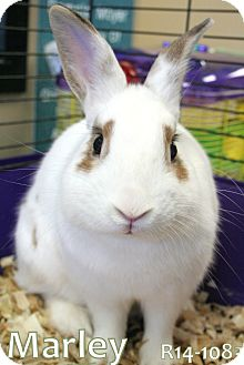 English Spot Mix for adoption in Tiffin, Ohio - Marley