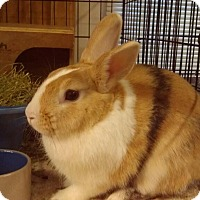 Adopt A Pet :: Stripe - Williston, FL