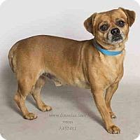 Adopt A Pet :: Rudy - Poway, CA