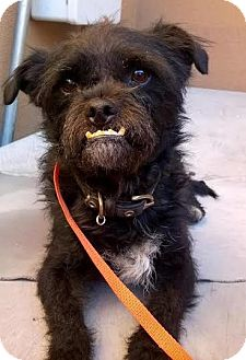 Terrier (Unknown Type, Small) Mix Dog for adoption in Westminster, California - Happy