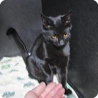 Adopt A Pet :: Cole - Albemarle, NC