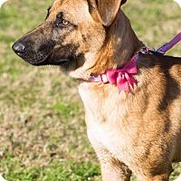 Adopt A Pet :: Cheyenne - Seattle, WA