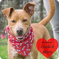 Terrier (Unknown Type, Medium) Mix Dog for adoption in San Leon, Texas - Gunner