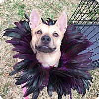 Shepherd (Unknown Type) Mix Dog for adoption in Allen, Texas - Louie