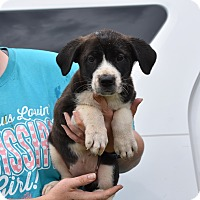 Adopt A Pet :: JILLY - South Dennis, MA