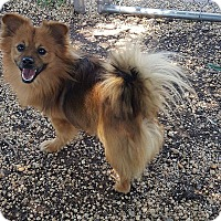 Adopt A Pet :: FLUFFY - Bridgewater, NJ