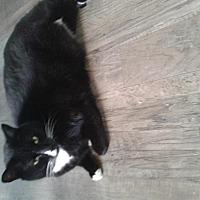 Adopt A Pet :: Wayne Newton - Maryville, TN