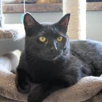 Adopt A Pet :: Jewels - Pequot Lakes, MN