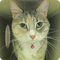 Adopt A Pet :: Ariel - Lloydminster, AB