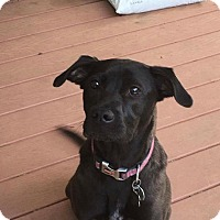Adopt A Pet :: Mazie - Lebanon, ME