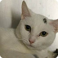 Adopt A Pet :: Snowflake - Westerly, RI