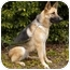 Photo 3 - German Shepherd Dog Dog for adoption in Los Angeles, California - Memphis von Mandelbaum