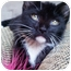 Photo 4 - Domestic Shorthair Kitten for adoption in Chicago, Illinois - Columbus