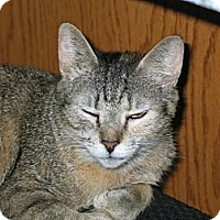 Adopt A Pet :: Pixel - West Dundee, IL