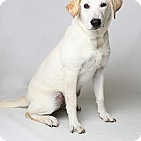 Adopt A Pet :: Rikka Pup - Foster, RI