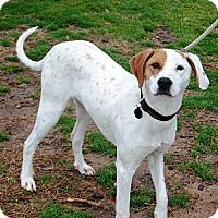 Adopt A Pet :: Bernard - PENDING, in Maine - kennebunkport, ME