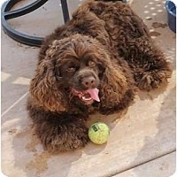 Adopt A Pet :: Sammy 3 - San Diego, CA