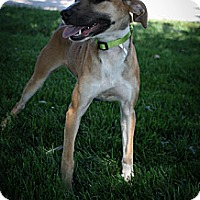 Adopt A Pet :: Madison - Broomfield, CO