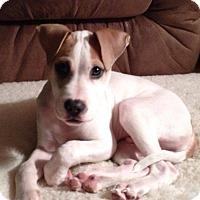 Adopt A Pet :: HANK! - Grafton, OH